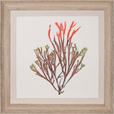 Bradbury Seaweeds 4 | Gracious Style